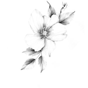wild rose – art print