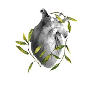 olive heart – art print
